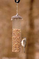 Titmouse on Peanut Feeder